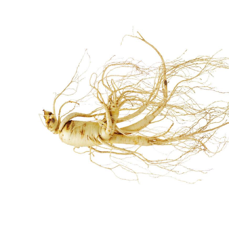 Taigawurzel Heilpflanze