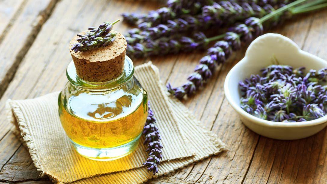 Lavendel: Arzneipflanze des Jahres 2020