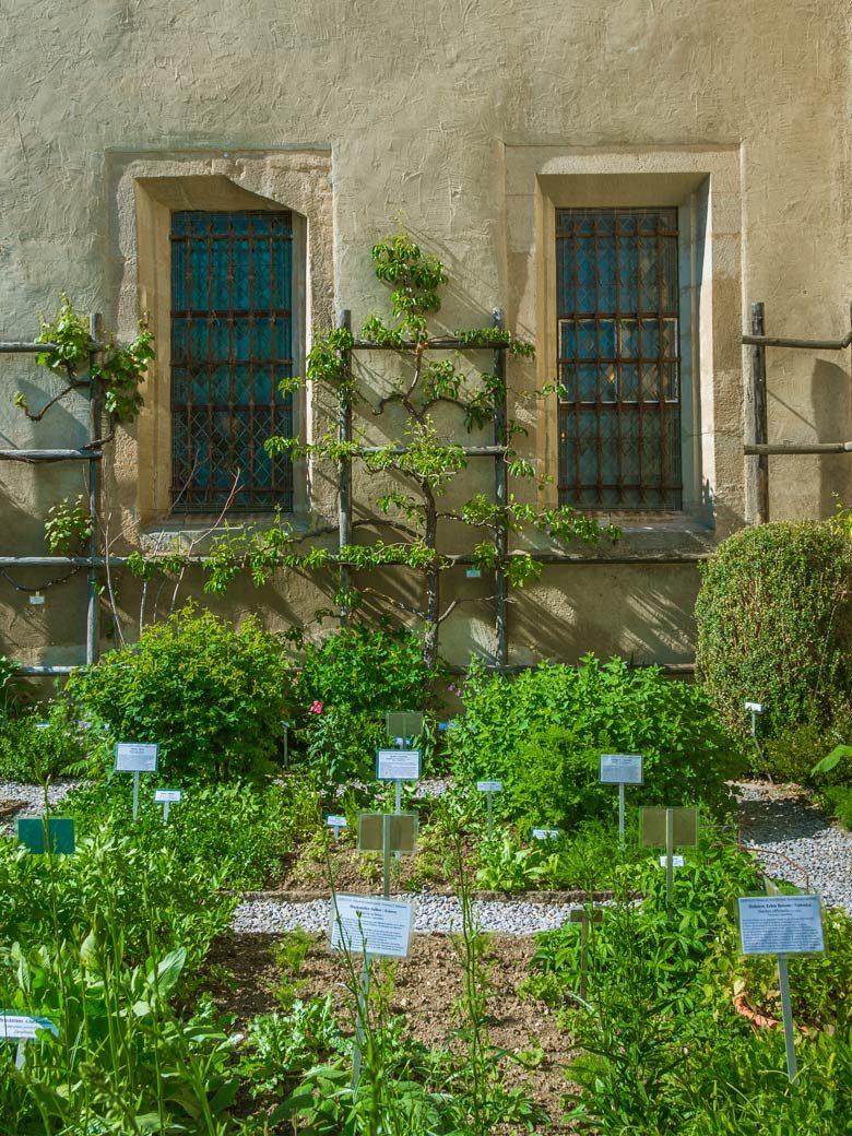 Heilpflanzen Klostergarten